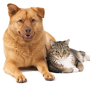Pets-small