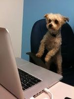 Dog at keyboard