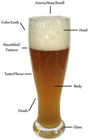 Beer-anatomy1 (1)