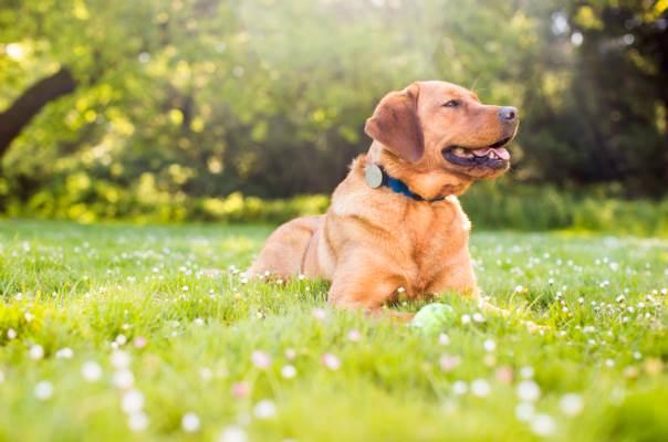 Quantified dog