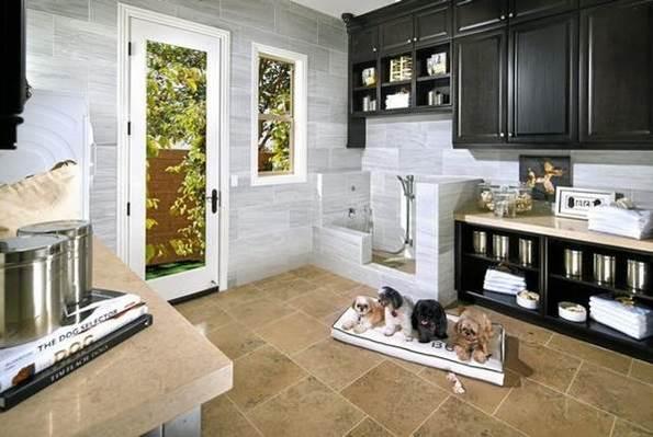 Dog suite
