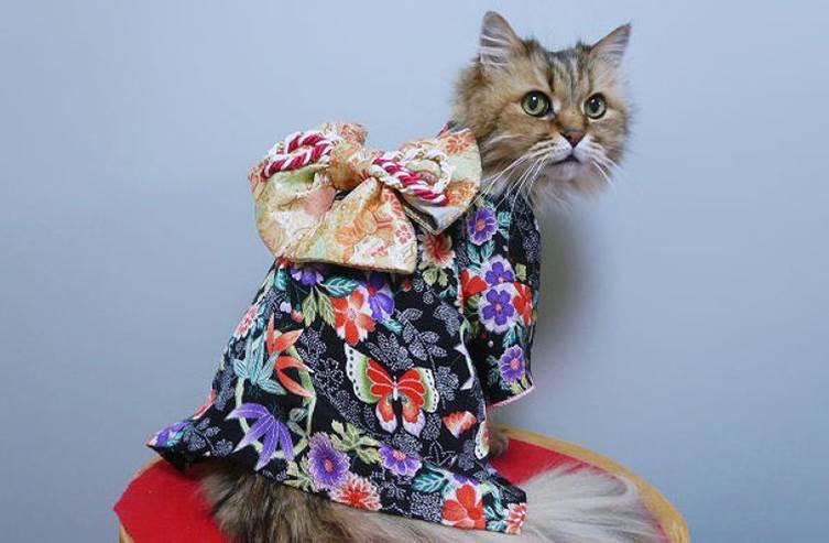 Cat in a kimono
